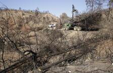 VIDEO. Inician en Maials la regeneración del bosque quemado