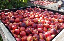 Asaja anuncia mobilitzacions pel baix preu de la fruita
