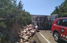 Tallada la C-1412b al bolcar un camió de porcs