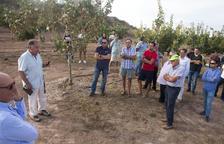Visita a una plantació de pistatxos organitzada per la Cooperativa d'Ivars i el Grup Borges i que va reunir 45 agricultors.