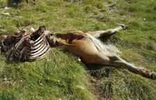 El cadáver de la última yegua encontrada en la zona de Salient.