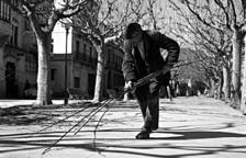 Recollint branques de la poda dels arbres del passeig Brudieu de la Seu, a començaments dels anys 60.