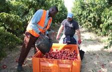 Afrucat aboga por un plan Renove para el sector de la fruta de hueso