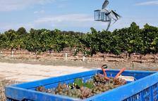 Les vinyes es troben a la Pobla de Cérvoles.