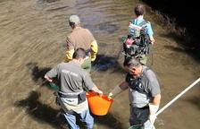 Rescatan 1.000 truchas de canales del Jussà