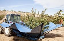 El riego avanza un año el cultivo del pistacho en el Segarra-Garrigues