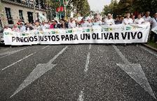 Miles de olivareros piden en Madrid que