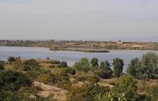 Les carpes obliguen a renovar l'aigua de l'estany d'Ivars i Vila-sana per netejar-la