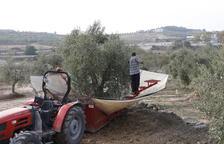 Vía libre al almacenamiento privado de aceite en España