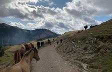 Caravana de 45 cavalls salvats de maltractaments cap a Coll de Nargó