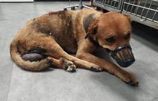 Denuncian la muerte de un perro abandonado enfermo en Bellvís