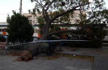 Mor una dona a Mallorca al caure-li una palmera pel vent, amb ratxes de 170 km/h