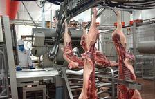Uno de cada cuatro empleados del matadero del Grupo Pini en Binéfar procede de Lleida