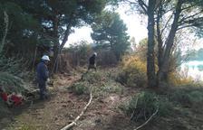 En marcha un nuevo plan para adecuar bosques en Almacelles