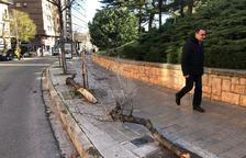 Arbres caiguts al carrer Salmeron de Lleida.