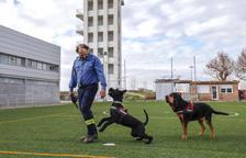 El Grup Caní de Recerca del parc de Bombers de Lleida ha fet una trentena d'actuacions aquest any a tot Catalunya en recerques de persones