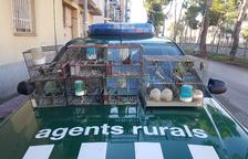 Los Rurales decomisan 28 pájaros capturados con jaulas trampa en Cervera