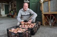 Actualmente en el municipio hay una decena de productores de esta cebolla.