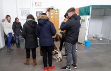 Estudiantes voluntarios en el refugio provisional de animales