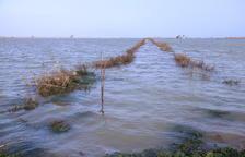 Tres mil hectàrees d'arrossars del delta de l'Ebre han estat arrasades