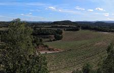 Cultiu intensiu a la finca de Cuadrat Valley, al terme de Juncosa, on s'ubicarà el molí.