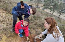Plantan unas 300 encinas en la Noguera