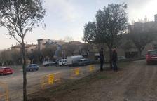 Los árboles que se han trasplantado en el Camp del Serra.