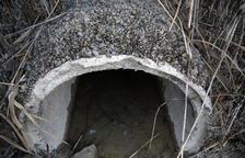 El mejillón cebra obliga al Canal d'Urgell a limpiar una balsa de 4 ha