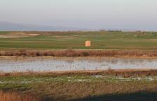 La llacuna de la Unilla d'Almenar reapareix amb les intenses pluges dels últims mesos