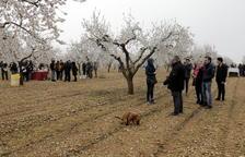 Visitas a la floración en 5 pueblos de Les Garrigues