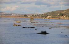 Mequinensa proposa portar llots de la cua de Riba-roja al delta de l'Ebre