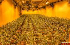 Acusat de tenir mil plantes de 'maria' en una casa de Montoliu