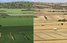 Agricultura i canvi climàtic. Investigacions des de Lleida per adaptar-nos a un clima canviant
