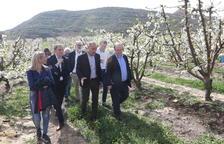 """Iceta assegura que la crisi de preus de la fruita és una preocupació """"del país"""""""
