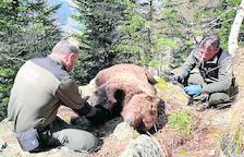 La jueza de Vielha decreta el secreto de sumario en el caso del oso Cachou