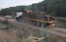 Roban seiscientas toneladas de madera en Les Garrigues