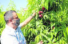 La fruita de pinyol obre a Mercolleida amb cotitzacions a l'alça