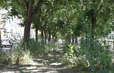 Veïns denuncien que hi ha carrers insalubres a Pardinyes i la Bordeta
