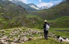 Un pastor con un rebaño de ovejas.