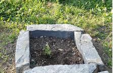 Municipios aragoneses plantan encinas en memoria de los fallecidos por Covid-19