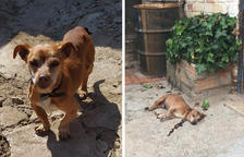 Denuncia la mort del seu gos a trets a Almenar perquè bordava