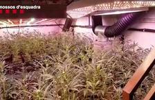 Cae una red de tráfico de marihuana que tenía una plantación en El Tarròs