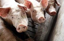 Imagen de archivo de una explotación de porcino de Alcarràs.