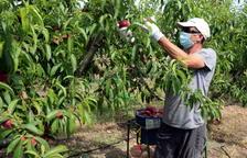 DOCUMENT   Manifest per 'netejar' la imatge de Lleida i dels pagesos