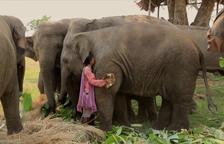 'La Noche Temática' es dedica a la caça i l'extinció dels elefants