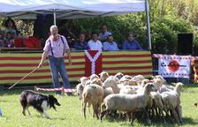 Suspenden el concurso de 'gossos d'atura' de Llavorsí