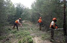 Reobren 75 km de camins danyats pel temporal Glòria