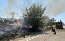 Un incendi forestal a Sanaüja arrasa 1,5 hectàrees