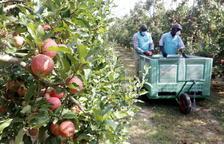 Armilles de colors i grups de quinze treballadors a la poma