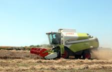 Lleida, amb un 20% menys de cereal fins a les 419.000 t